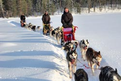 Nordeuropa, Lappland, Schweden-Expeditionen: Husky-Expeditionen - Hundeschlitten in der Spur