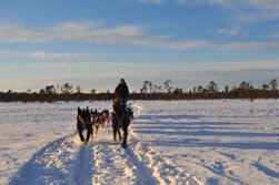 Nordeuropa, Lappland, Schweden-Expeditionen: Husky-Expeditionen - Winterlandschaft schwedisch Lapplands